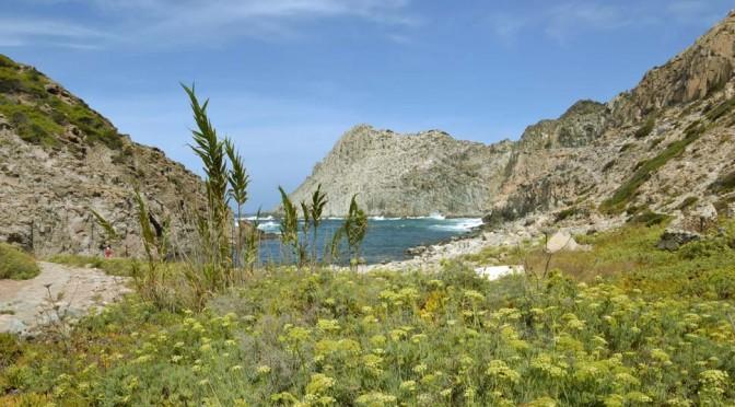 Visita guidata alla scoperta dell'Isola di San Pietro e del Falco della Regina!